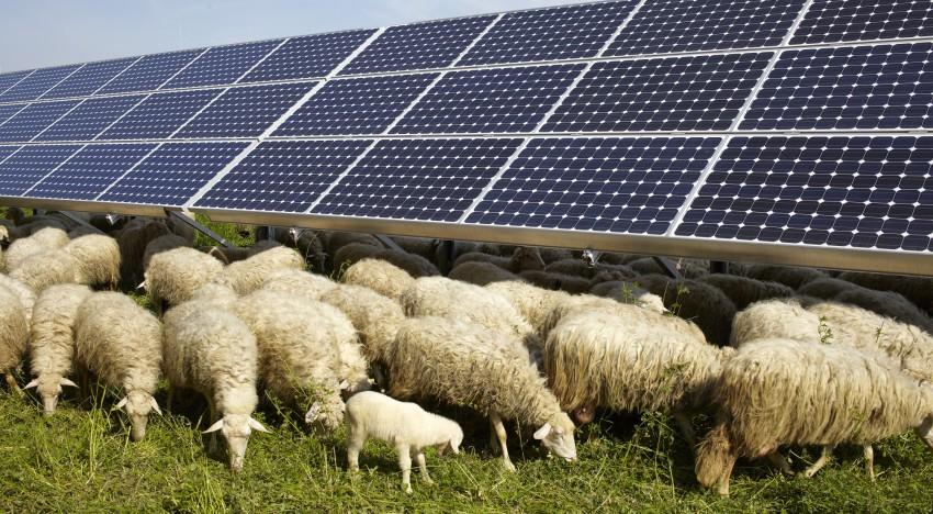 Pratopascolo fotovoltaico